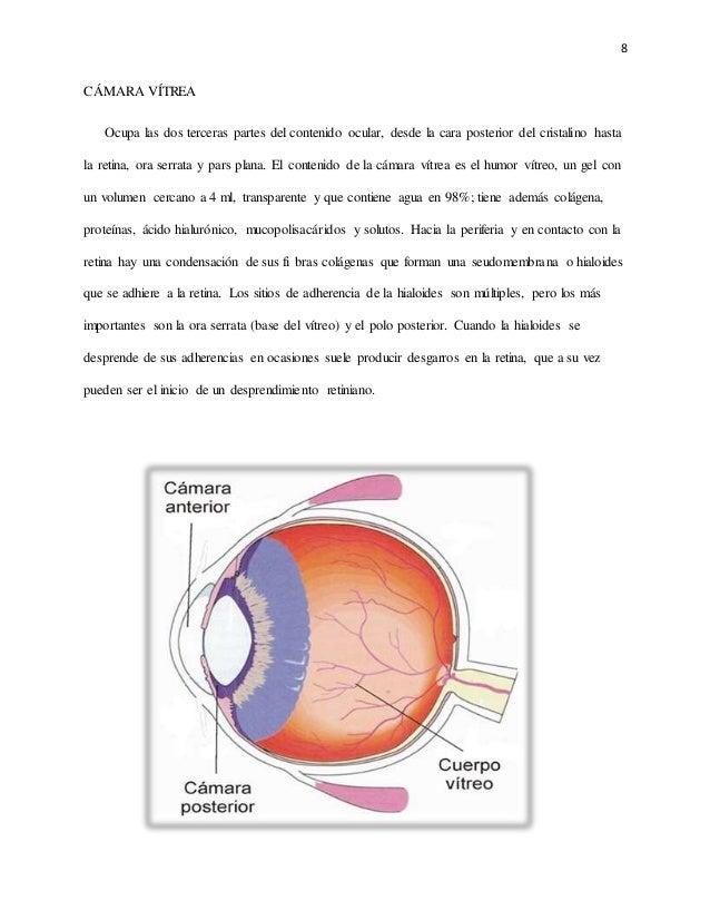 Cámaras del ojo