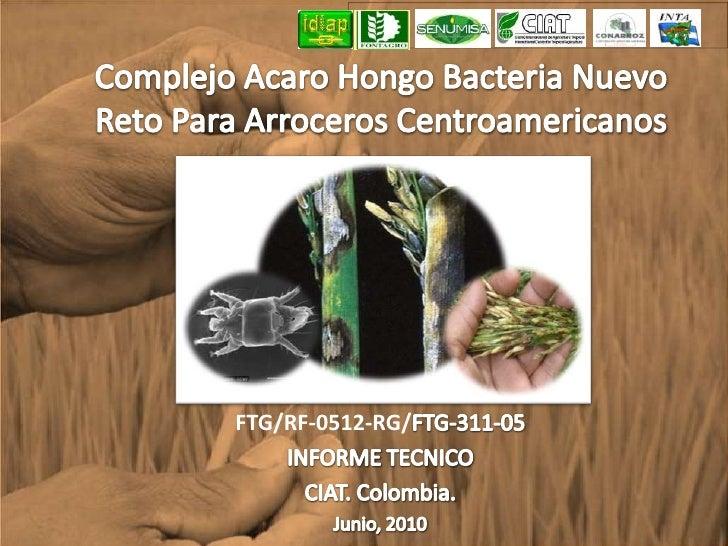 Complejo Acaro Hongo Bacteria Nuevo Reto Para Arroceros Centroamericanos<br />FTG/RF-0512-RG/FTG-311-05<br />INFORME TECNI...