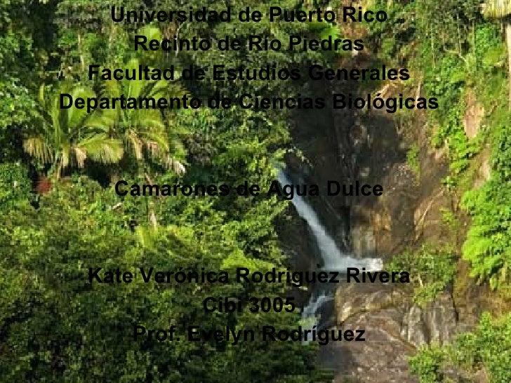 Universidad de Puerto Rico Recinto de Río Piedras Facultad de Estudios Generales Departamento de Ciencias Biológicas Camar...