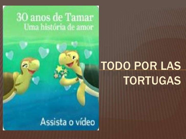 Todo por las tortugas<br />