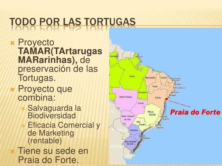 TODO POR LAS TORTUGAS<br />Proyecto TAMAR(TArtarugasMARarinhas), depreservación de las Tortugas.<br />Proyecto que combina...