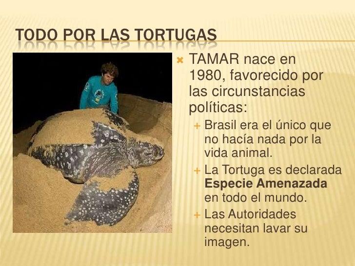 TODO POR LAS TORTUGAS<br />TAMAR nace en 1980, favorecido por las circunstancias políticas:<br />Brasil era el único que n...