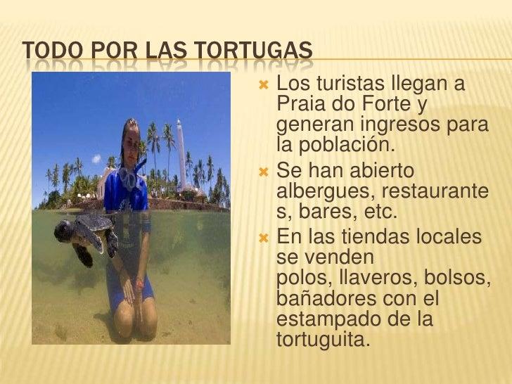 TODO POR LAS TORTUGAS<br />Los turistas llegan a Praia do Forte y generan ingresos para la población.<br />Se han abierto ...