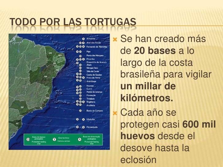 TODO POR LAS TORTUGAS<br />Se han creado más de 20 bases a lo largo de la costa brasileña para vigilar un millar de kilóme...