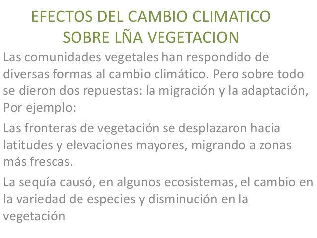 EFECTOS DEL CAMBIO CLIMATICO SOBRE LÑA VEGETACION Las comunidades vegetales han respondido de diversas formas al cambio cl...