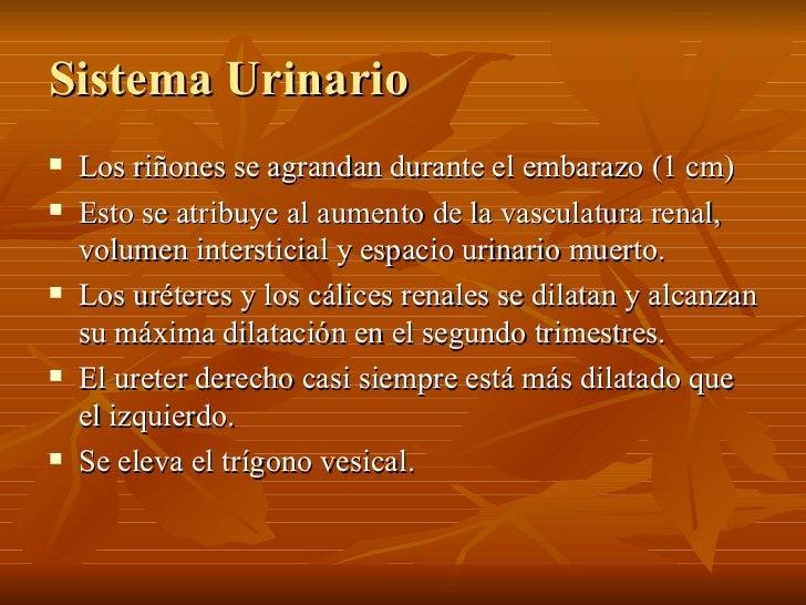 Sistema Urinario <ul><li>Los riñones se agrandan durante el embarazo (1 cm) </li></ul><ul><li>Esto se atribuye al aumento ...