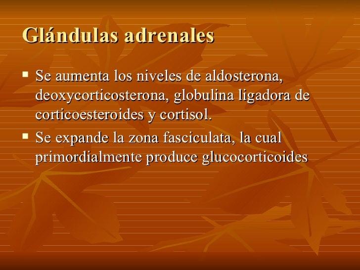 Glándulas adrenales <ul><li>Se aumenta los niveles de aldosterona, deoxycorticosterona, globulina ligadora de corticoester...