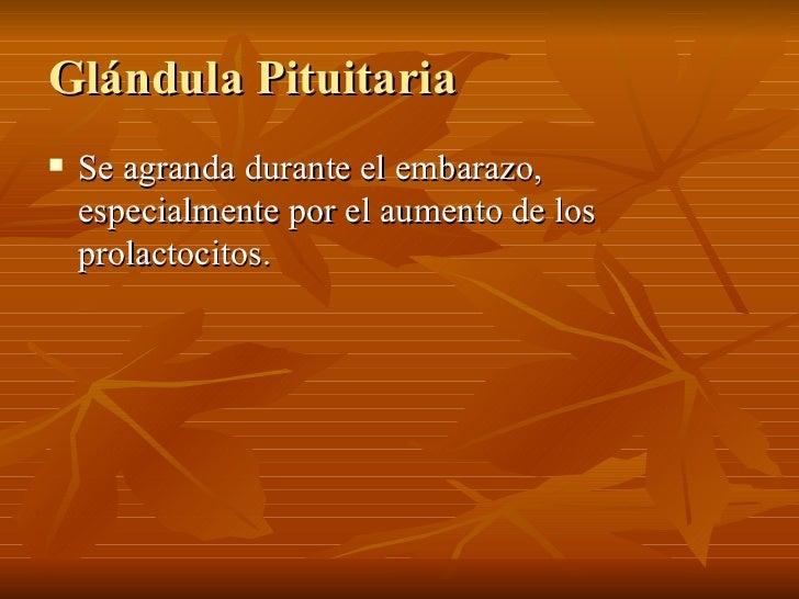 Glándula Pituitaria <ul><li>Se agranda durante el embarazo, especialmente por el aumento de los prolactocitos.  </li></ul>