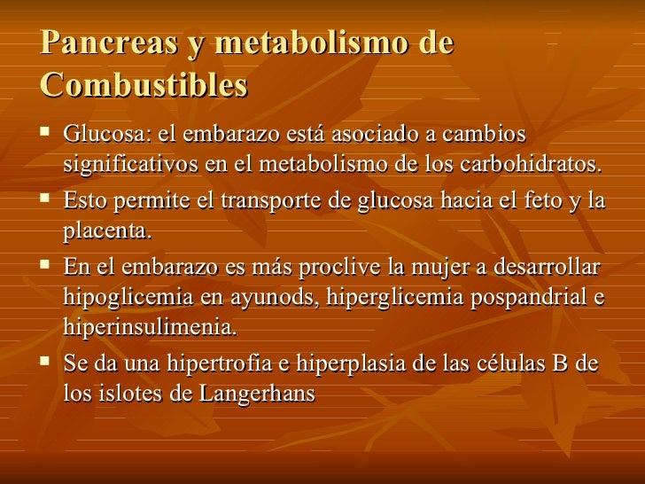 Pancreas y metabolismo de Combustibles <ul><li>Glucosa: el embarazo está asociado a cambios significativos en el metabolis...