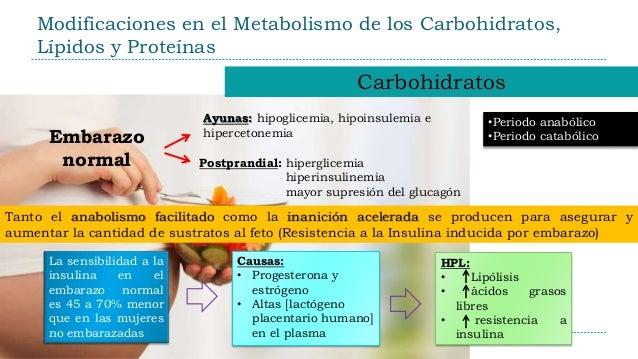 Aprender todo acerca de metabolismo del hierro analitica