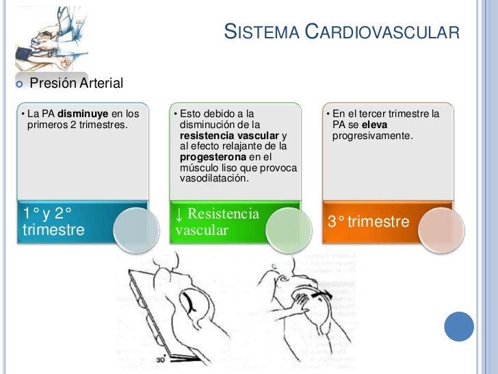 SISTEMA CARDIOVASCULAR   Presión Arterial• La PA disminuye en los   • Esto debido a la            • En el tercer trimestr...