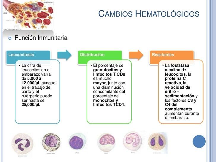 CAMBIOS HEMATOLÓGICOS   Función InmunitariaLeucocitosis               Distribución              Reactantes     • La cifra...