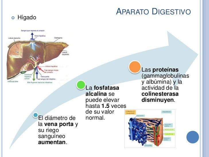 APARATO DIGESTIVO   Hígado                                                 Las proteínas                                 ...