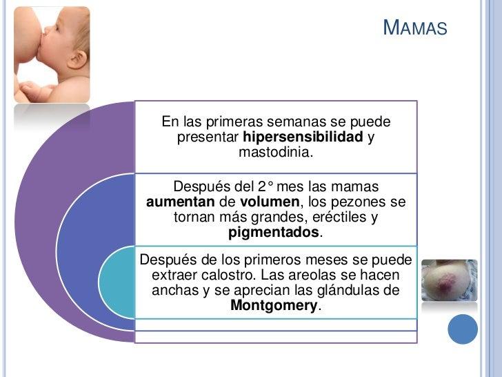 MAMAS   En las primeras semanas se puede     presentar hipersensibilidad y               mastodinia.   Después del 2° mes ...