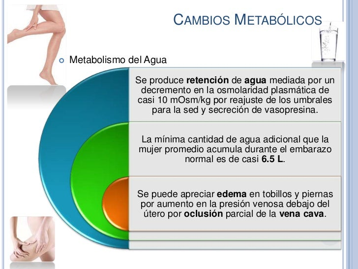 CAMBIOS METABÓLICOS   Metabolismo del Agua                 Se produce retención de agua mediada por un                  d...