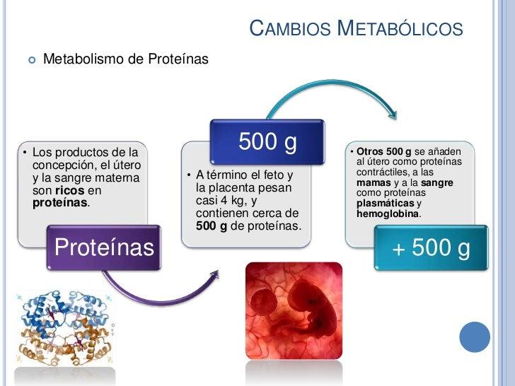CAMBIOS METABÓLICOS   Metabolismo de Proteínas• Los productos de la                                  500 g          • Otr...