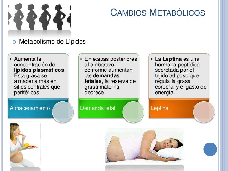 CAMBIOS METABÓLICOS   Metabolismo de Lípidos• Aumenta la             • En etapas posteriores    • La Leptina es una  conc...