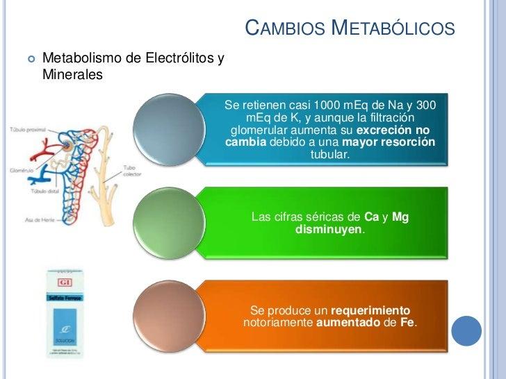 CAMBIOS METABÓLICOS   Metabolismo de Electrólitos y    Minerales                                    Se retienen casi 1000...