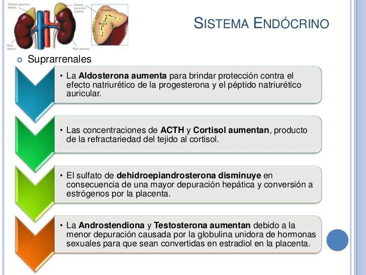 SISTEMA ENDÓCRINO   Suprarrenales          • La Aldosterona aumenta para brindar protección contra el            efecto n...