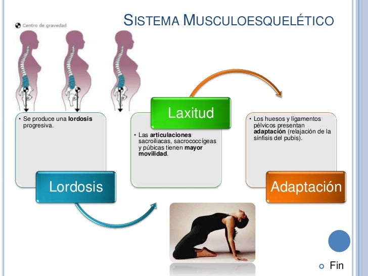 SISTEMA MUSCULOESQUELÉTICO• Se produce una lordosis                                         Laxitud              • Los hue...