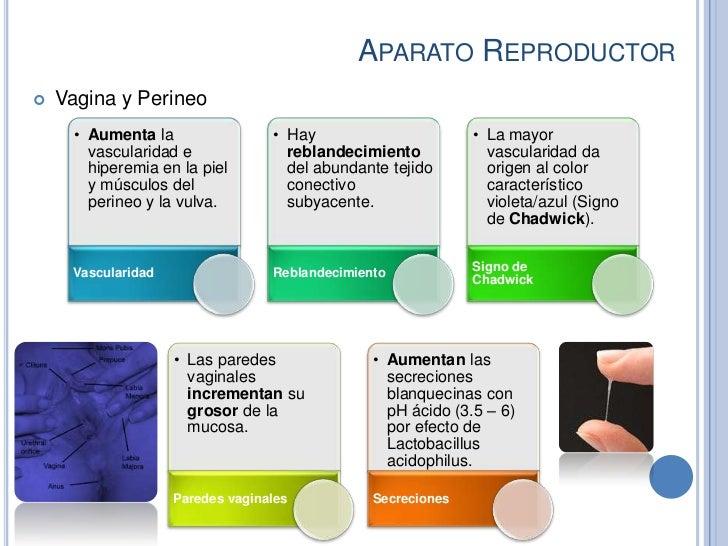 APARATO REPRODUCTOR   Vagina y Perineo      • Aumenta la                • Hay                       • La mayor        vas...