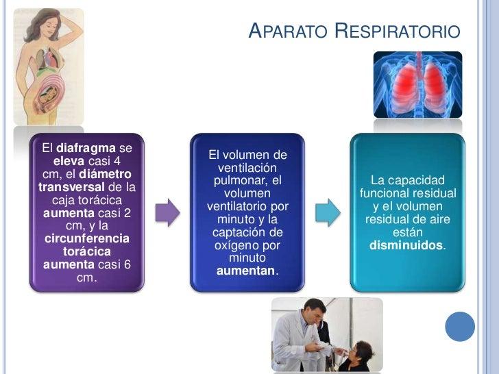 APARATO RESPIRATORIO El diafragma se                    El volumen de   eleva casi 4                      ventilación cm, ...