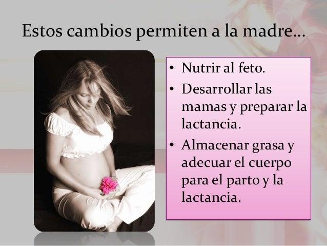 Estos cambios permiten a la madre… • Nutrir al feto. • Desarrollar las mamas y preparar la lactancia. • Almacenar grasa y ...