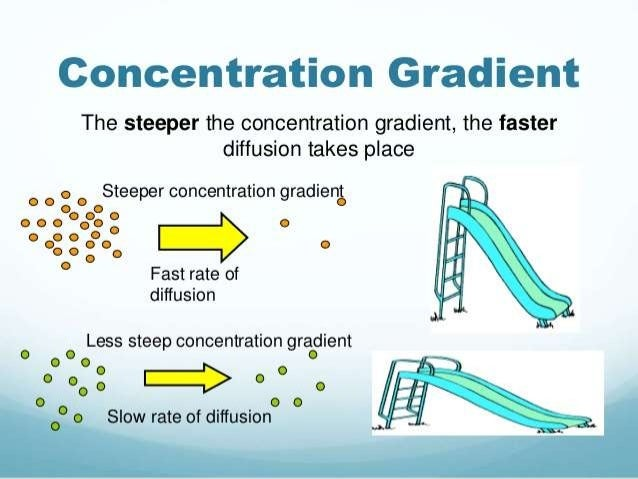 osmosis concentration gradient Notes for biology class on diffusion and osmosis molecules will always move down the concentration gradient, toward areas of lesser concentration.