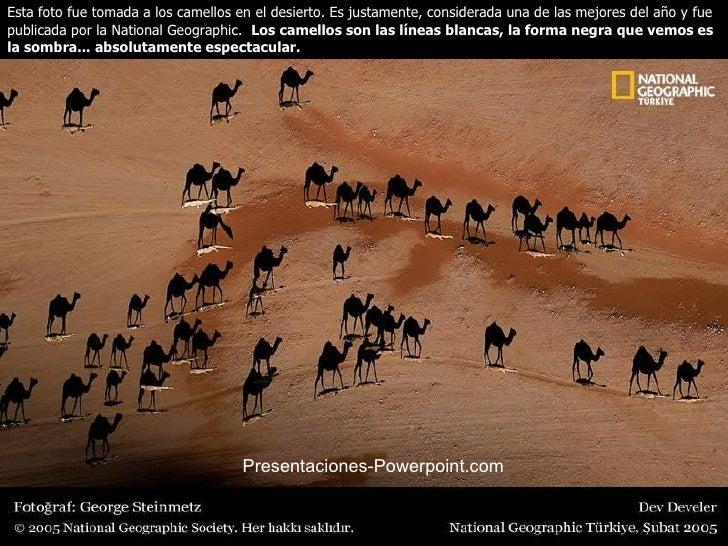 Esta foto fue tomada a los camellos en el desierto. Es justamente, considerada una de las mejores del año y fue publicada ...