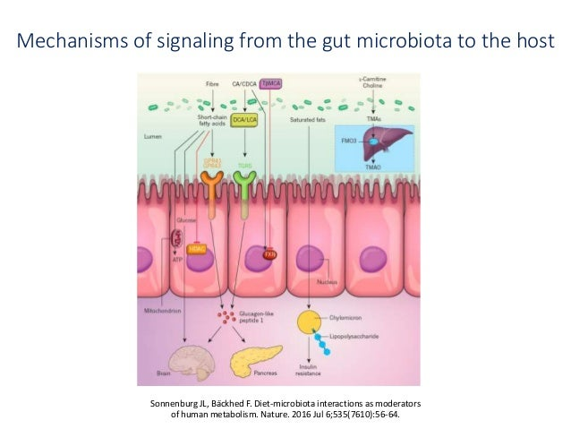What to Feed Your Gut Bacteria