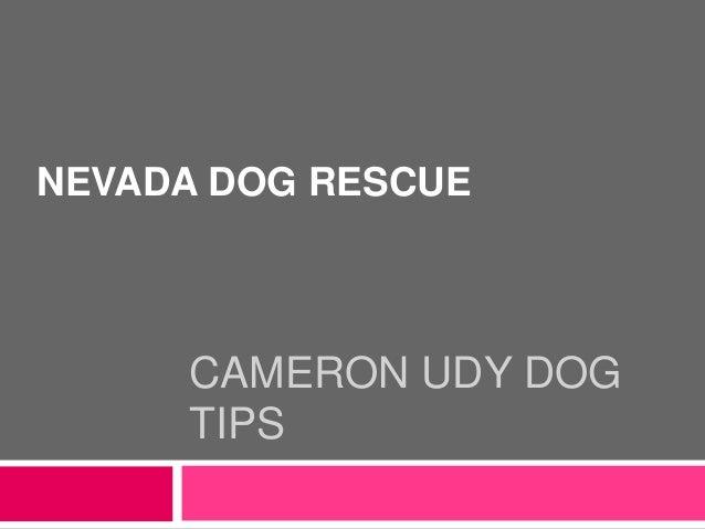 CAMERON UDY DOG TIPS NEVADA DOG RESCUE
