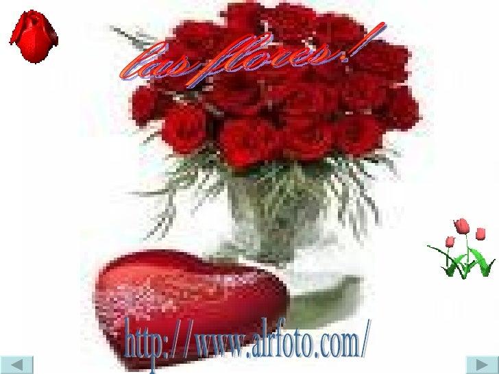 las flores! http://www.alrfoto.com/