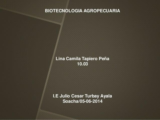 BIOTECNOLOGIA AGROPECUARIA Lina Camila Tapiero Peña 10.03 I.E Julio Cesar Turbay Ayala Soacha/05-06-2014