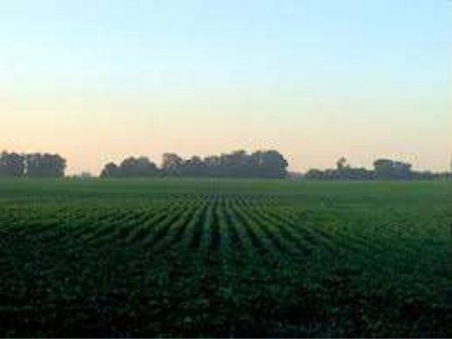 LA AGRICULTURA URBANA       CURSO : 11-01         Grupo:1