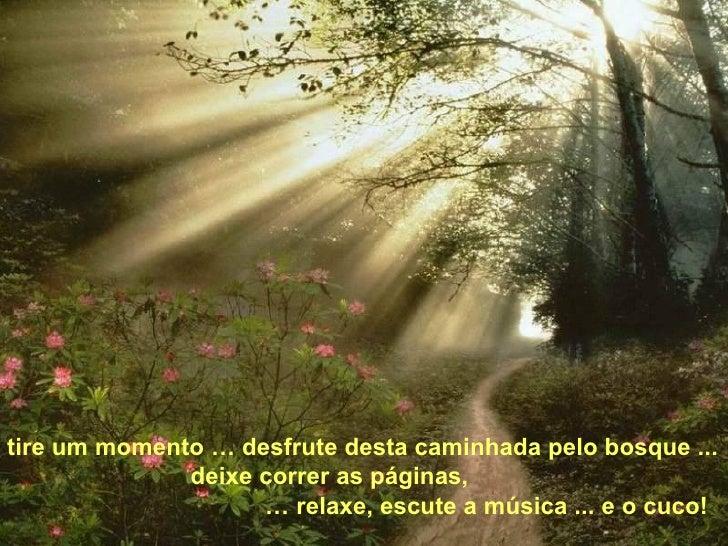 tire um momento … desfrute desta caminhada pelo bosque ... deixe correr as páginas, …  relaxe, escute a música ... e o cuco!