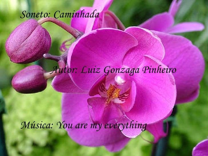 Soneto: Caminhada  Autor: Luiz Gonzaga Pinheiro Música: You are my everything