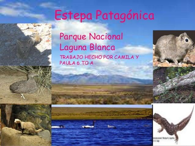 Estepa Patagónica Parque Nacional Laguna Blanca TRABAJO HECHO POR CAMILA Y PAULA 6 TO A