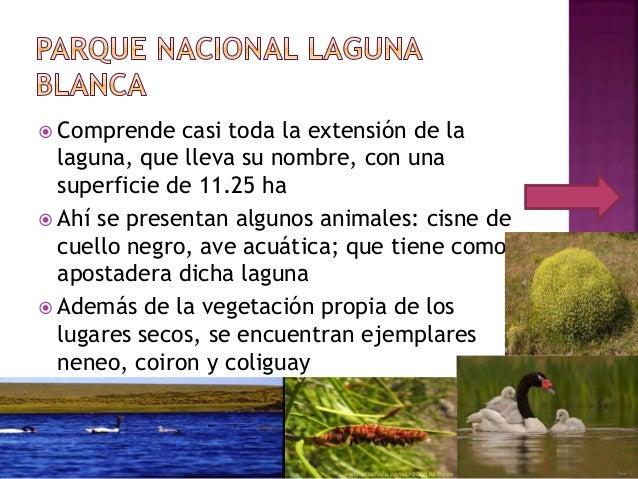  Comprende casi toda la extensión de la laguna, que lleva su nombre, con una superficie de 11.25 ha  Ahí se presentan al...