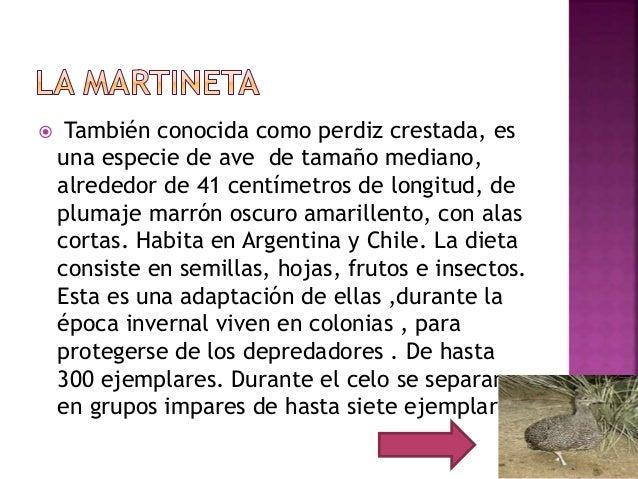  También conocida como perdiz crestada, es una especie de ave de tamaño mediano, alrededor de 41 centímetros de longitud,...