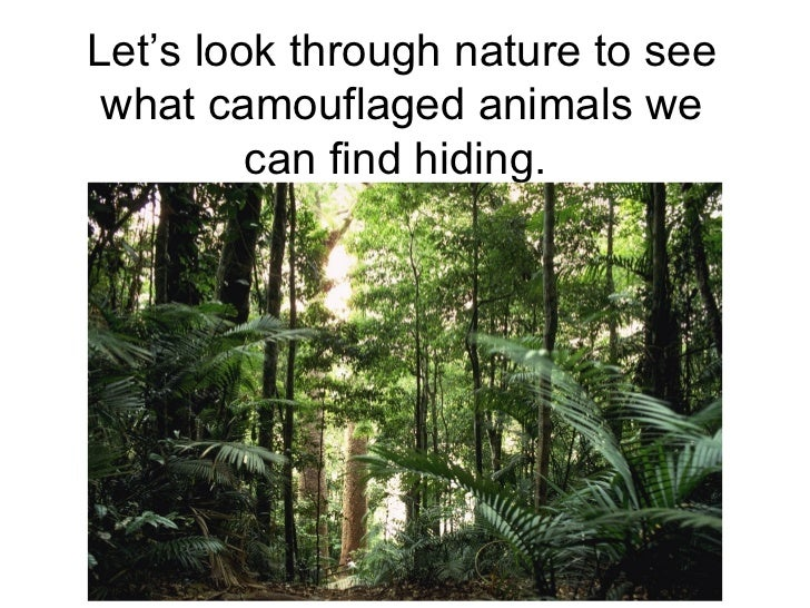 Let's look through nature to see what camouflaged animals we         can find hiding.