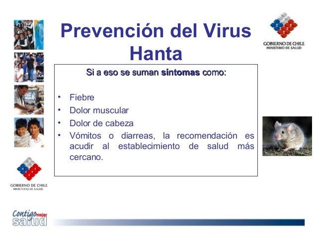 Prevención del VirusHantaSi a eso se sumanSi a eso se suman síntomassíntomas como:como:• Fiebre• Dolor muscular• Dolor de ...