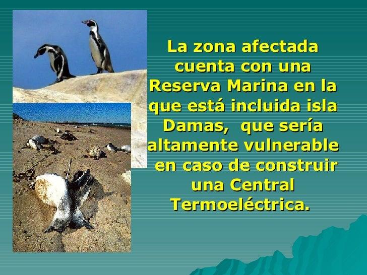La zona afectada cuenta con una Reserva Marina en la que está incluida isla Damas,  que sería altamente vulnerable  en cas...