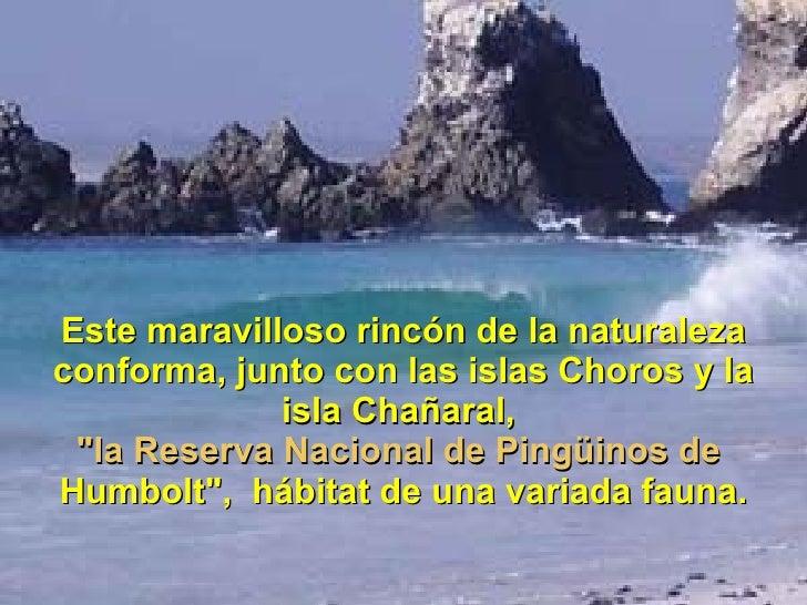 """Este maravilloso rincón de la naturaleza conforma, junto con las islas Choros y la isla Chañaral,  """"la Reserva Nacion..."""