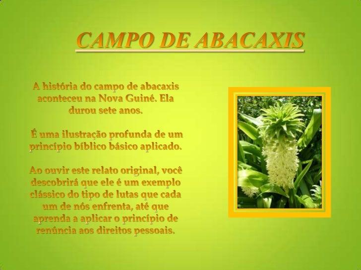 CAMPO DE ABACAXIS<br />A história do campo de abacaxis aconteceu na Nova Guiné. Ela durou sete anos.                      ...