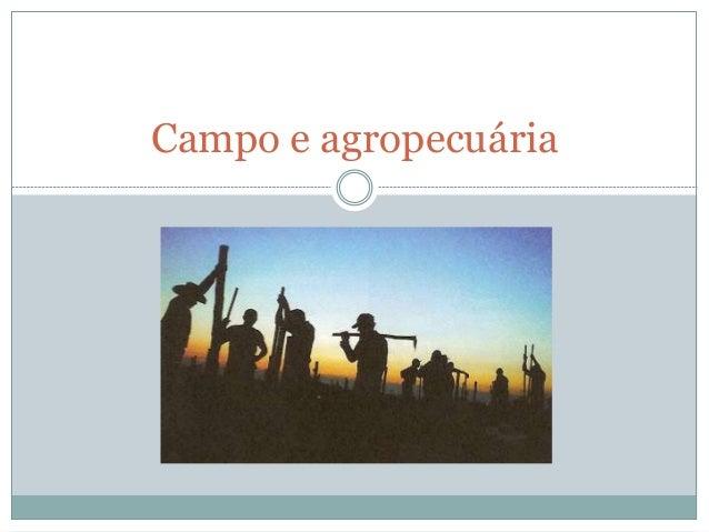 Campo e agropecuária