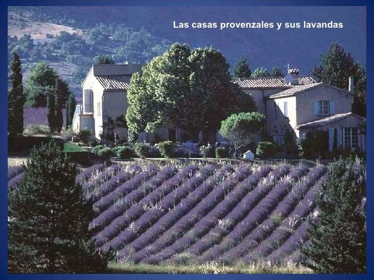 Las casas provenzales y sus lavandas
