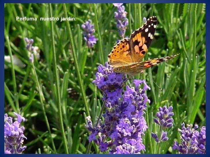 Perfuma  nuestro jardín.