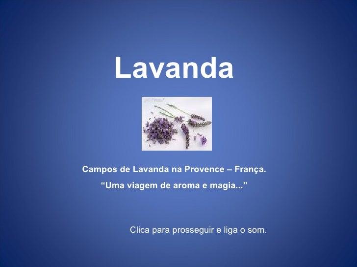 """Lavanda Campos de Lavanda na Provence – França. """" Uma viagem de aroma e magia..."""" Clica para prosseguir e liga o som."""