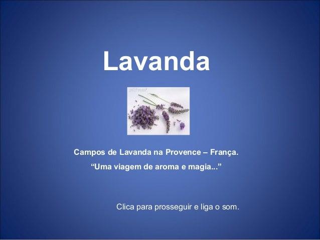 """Lavanda Campos de Lavanda na Provence – França. """"Uma viagem de aroma e magia..."""" Clica para prosseguir e liga o som."""