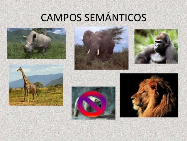 CAMPOS SEMÁNTICOS